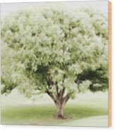 Soft Green Tree Wood Print