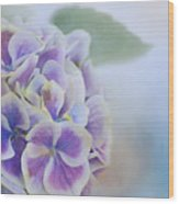 Soft Hydrangeas On Blue Wood Print