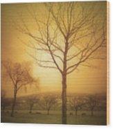 Soft Light In Summerland Wood Print