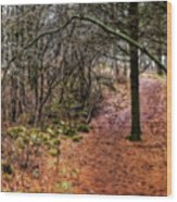 Soft Light In The Woods Wood Print