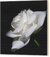 Soft Light White Rose Flower  Wood Print