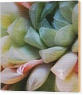 Soft Natural Succulents Wood Print