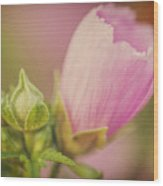 Soft Pink Flower Wood Print