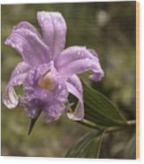 Soft Pink One-day Orchid With Droplets Of Dew Wood Print