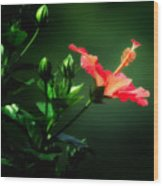 Soft Red Hibiscus Plant Wood Print