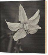 Soft Sepia Bloom Wood Print