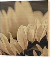 Soft Summer Light 3 Wood Print