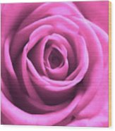 Soft Touch Pink Rose Wood Print