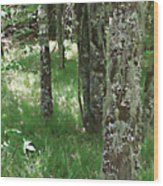 Soft Trees Wood Print