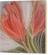 Soft Tulips Wood Print by Fatima Stamato
