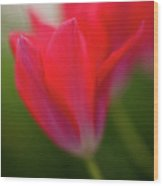 Soft Tulips Wood Print