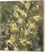 Soft Yellow Desert Flowers Wood Print
