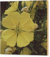 Soft Yellow Flowers Wood Print