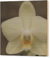 Soft Yellow Orchid Two Wood Print