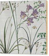 Softly Purple Crocus Wood Print