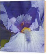 Softly Purple Wood Print