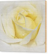 Softly Yellow Rose Wood Print