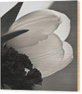 Lit Tulip Wood Print