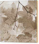 Softness Of Brown Maple Leaves Wood Print