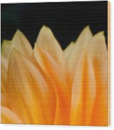 Softness Of The Petals Wood Print
