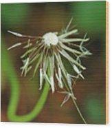 Soggy Dandelion Wood Print