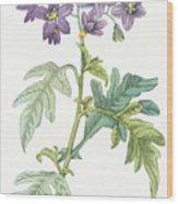 Solanum Quercifolium Wood Print