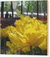 Solar Tulip Wood Print