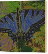 Solarized Butterfly Wood Print