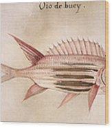 Soldier-fish, 1585 Wood Print