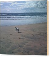 Solitary Doglooking To America Wood Print