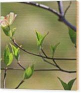 Solitary Dogwood Bloom Wood Print
