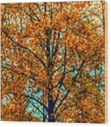 Solitary Fall Wood Print