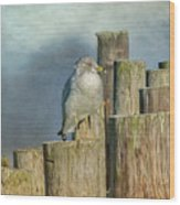 Solitary Gull Wood Print