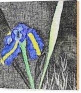 Solitary Iris Wood Print
