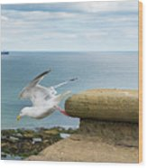 Solitary Seagull Take-off Wood Print