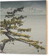 Solitary Tree Wood Print