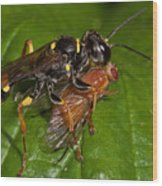 Solitary Wasp Wood Print