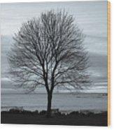 Solitude 1, New Castle Sunrise Wood Print