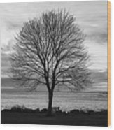 Solitude 3, New Castle Sunrise Wood Print