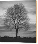 Solitude 4, New Castle Sunrise Wood Print