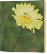 Solomente Amarillo Wood Print