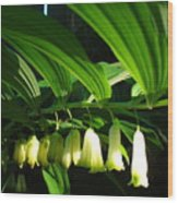 Solomon's Seal Wood Print