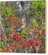 Song Of The Anhinga Wood Print