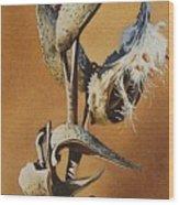 Song Sparrow And Milkweed Wood Print