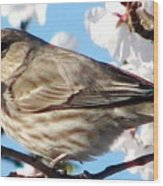 Song Sparrow Dining Out Wood Print