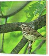 Songsparrow In Spring Wood Print