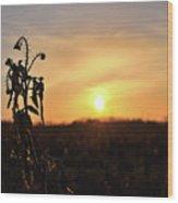 Sonnenuntergang Wood Print