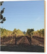 Sonoma Vineyards - Sonoma California - 5d19314 Wood Print by Wingsdomain Art and Photography