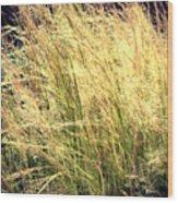 Sonoma Yellow Wood Print