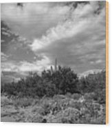 Sonoran Afternoon H10 Wood Print